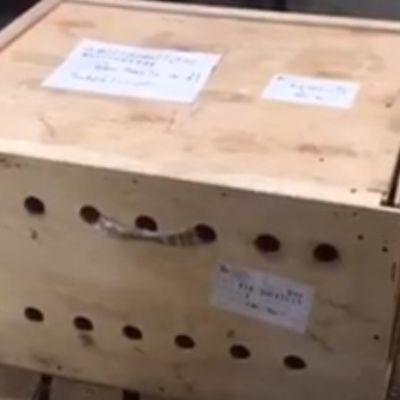 Misteriozna kutija stajala 7 dana na aerodromu: Osoblje se šokiralo kada su je otvorili! (VIDEO)