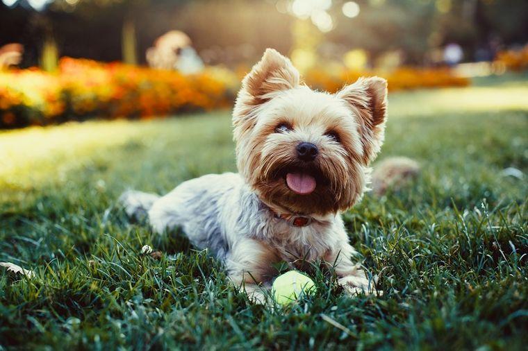 Letnje osveženje: Kako da napravite tuš za psa u svom dvorištu! (VIDEO)