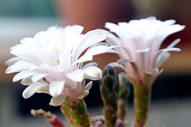Svaka kuća treba da ima bar jedan: Ovo je najtraženiji cvet na celom svetu! (FOTO)