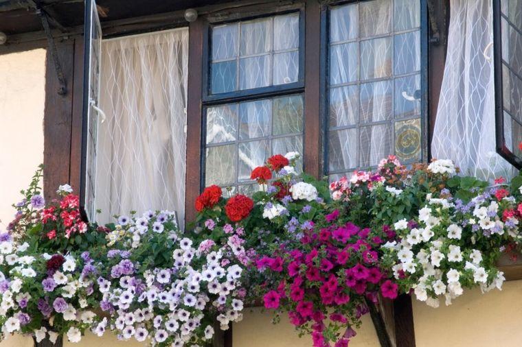 Da vam prozor postane rajski kutak: Najlepši prizor ovog leta uz malo truda! (FOTO)