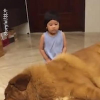 Majka ostavila bebu sa džinovskim psom: Ovakav prizor nije očekivala! (VIDEO)