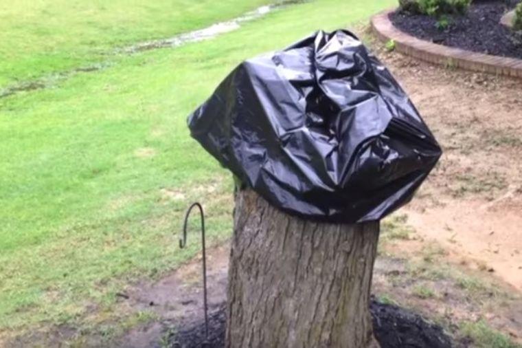 Posekao stablo i prekrio panj kesom: Žena mu u neverici gledala šta je napravio! (VIDEO)