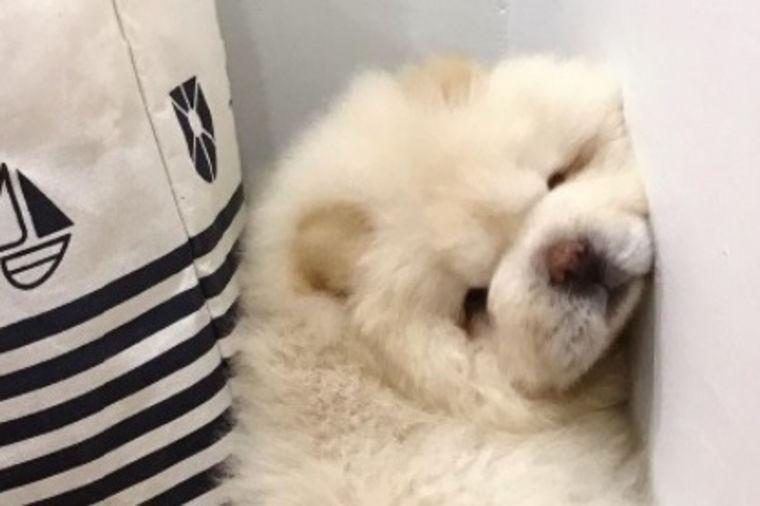 Milioni ljudi videlo ovog psa: Nešto najslađe što ćete danas videti! (FOTO, VIDEO)