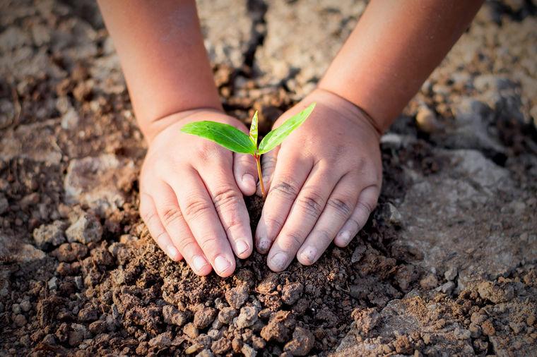 Dete, foto: Shutterstock
