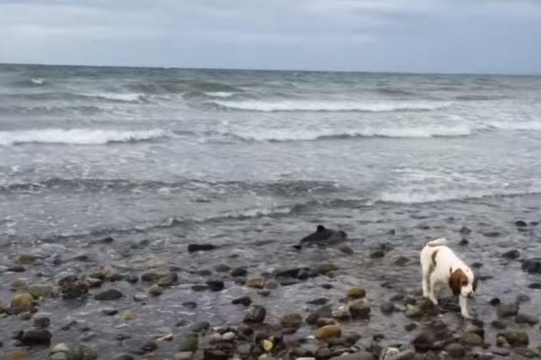 Pas se zatrčao u more i počeo da laje: Vlasnik shvatio jezivu istinu! (VIDEO)