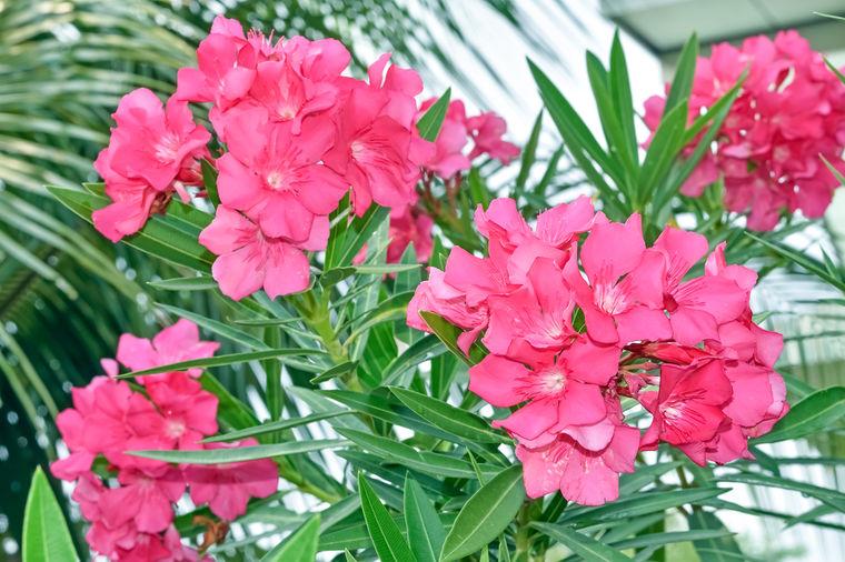 Ne prilazite im, ni iz daleka: Ovo su najotrovnije biljke koje rastu svuda! (FOTO)