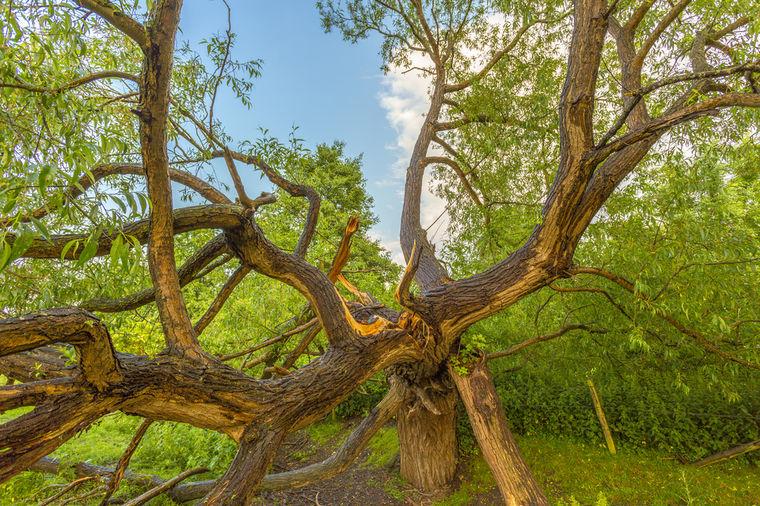 Hrast, Foto: Shutterstock