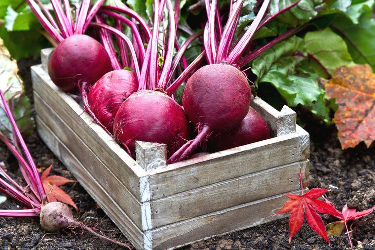 Kako da gajite cveklu kod kuće: Najlekovitija lisnata biljka uspeva svuda!