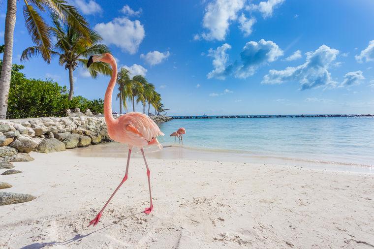 Raj na zemlji: Ulaz na ovu plažu košta 100 dolara, kada vidite  zašto, oduševićete se! (FOTO)