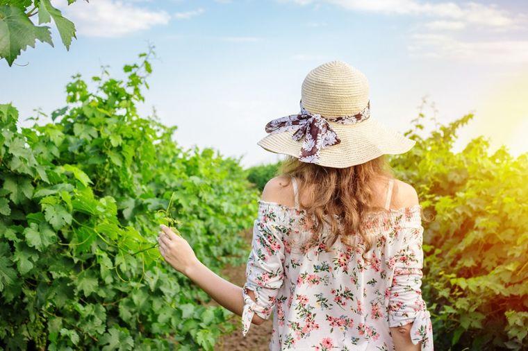 Šta sve leči list vinove loze: Od dijareje i želuca, do raka i Alchajmera!