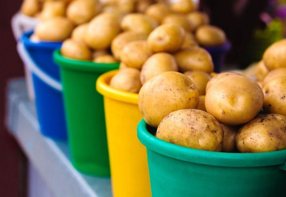 Svi obožavamo krompir, zar ne? 125799_krompir_ff
