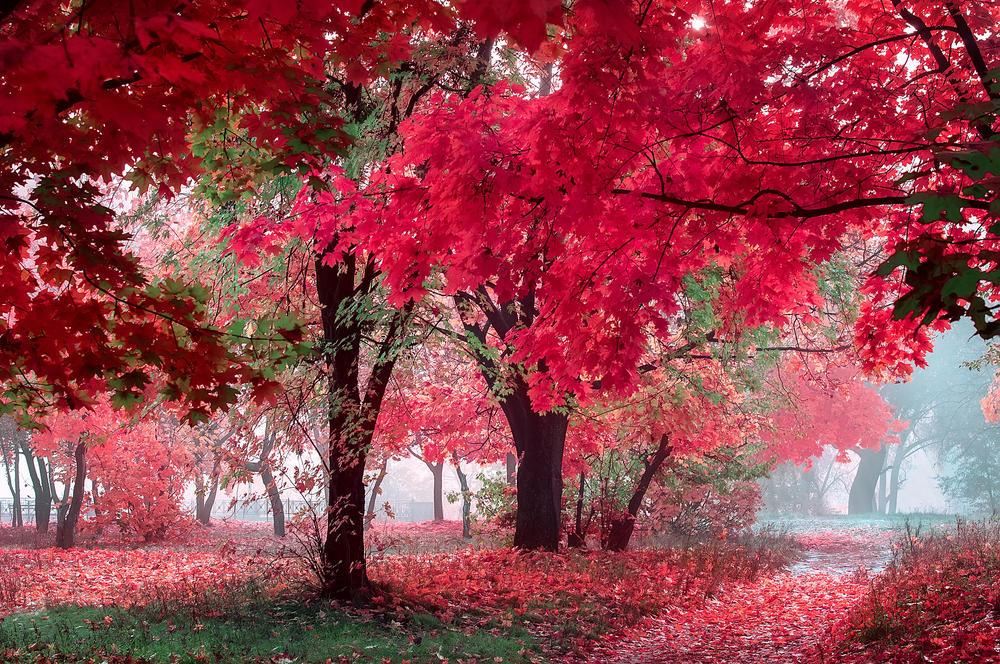 Jesen je najbudalastija tuga među tugama: 9 najlepših citata o najšarenijem godišnjem dobu