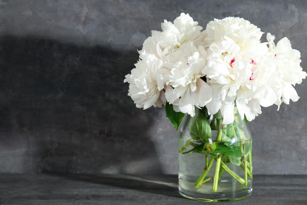Ove Otrovne Biljke Gajite U Svom Domu 12 Vrsta Cveća Koje