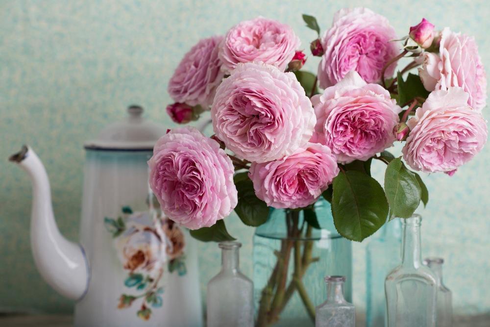 Engleske ruže