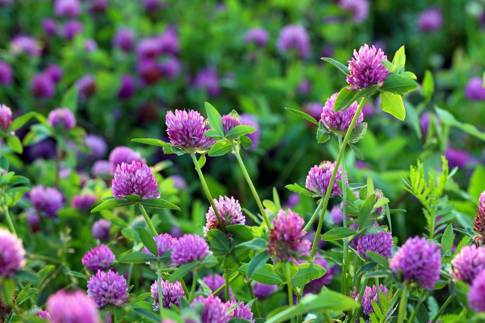 Livadi biljke na Ljekovito bilje
