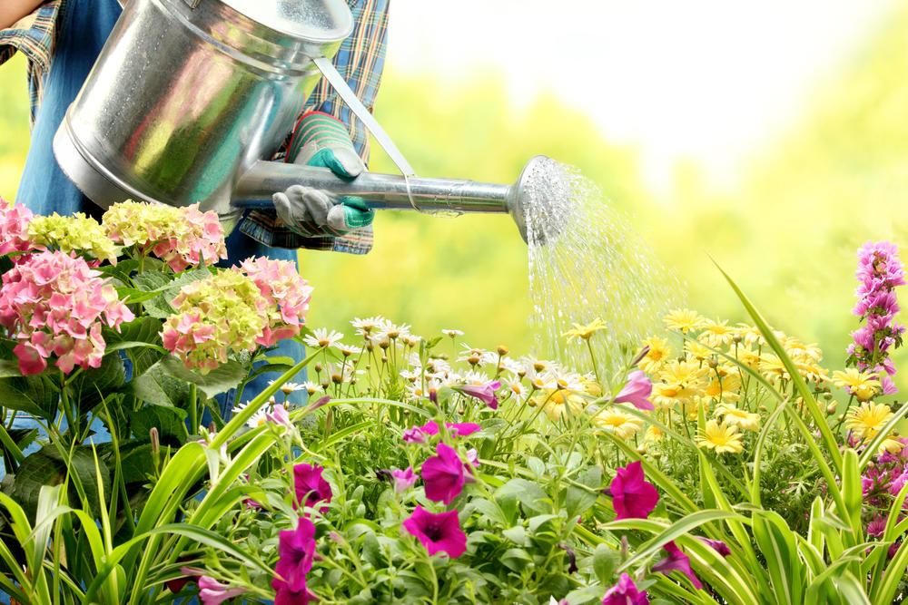 Biljke, Zalivanje, Zalivanje biljaka