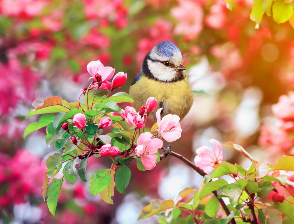 DUŠKO RADOVIĆ: Stiže proleće i žao mi je svih kojima to nije važno!
