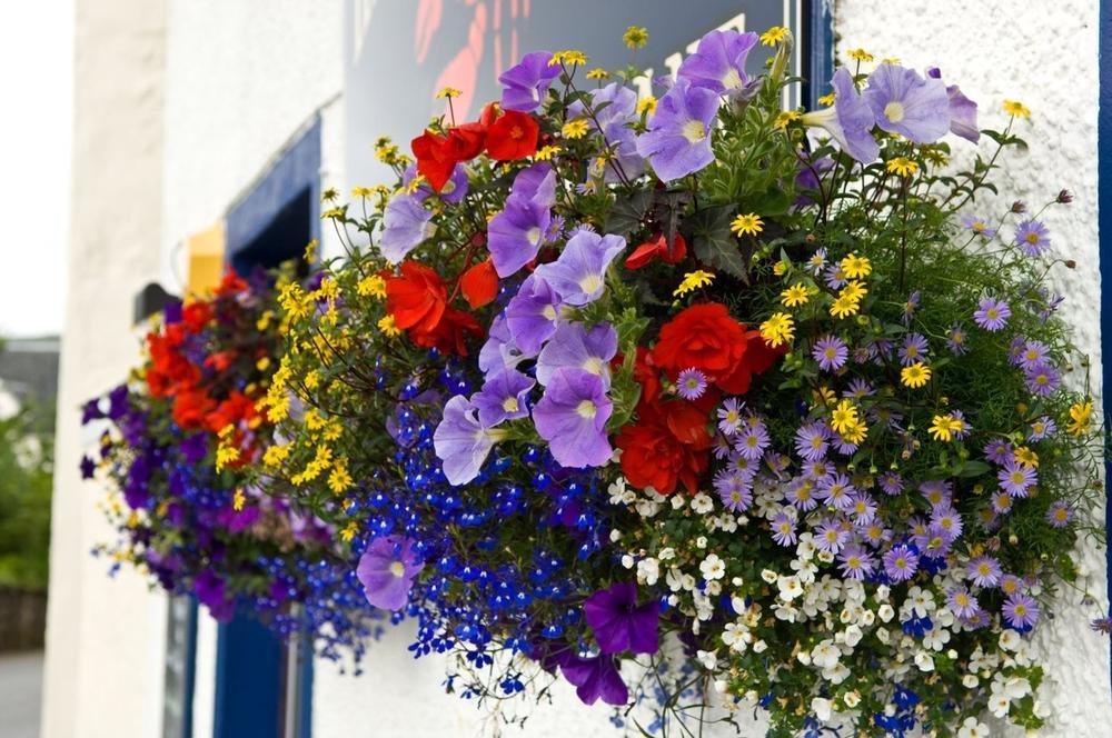 AKO VOLITE LJUBIČASTU BOJU: Evo koje cveće morate da posadite u svojoj bašti!