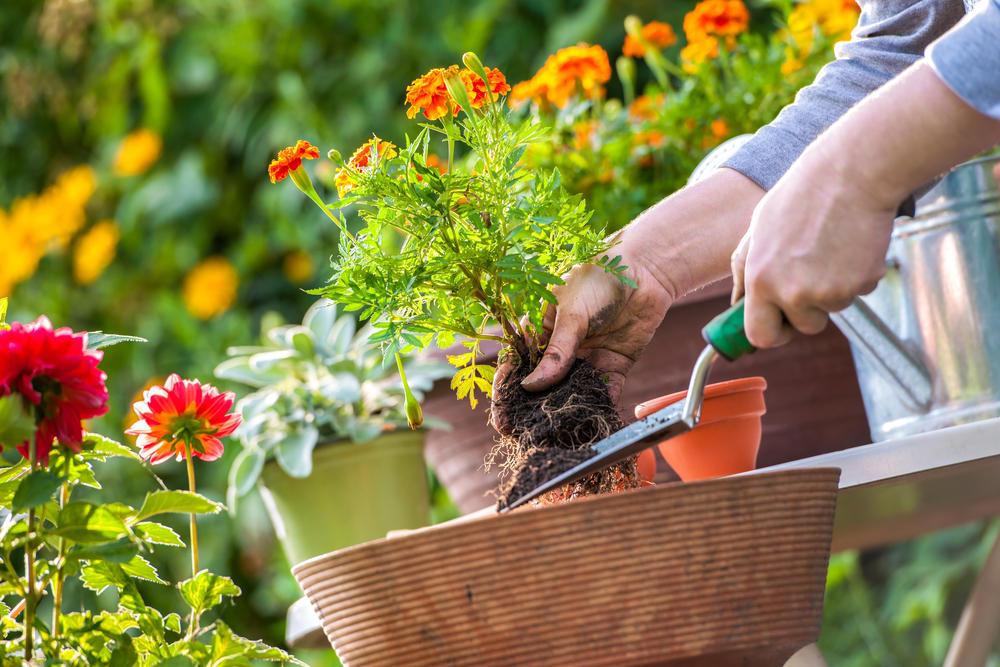 20 vrsta cveća koje cveta celo leto: Za baštu punu boja i mirisa!