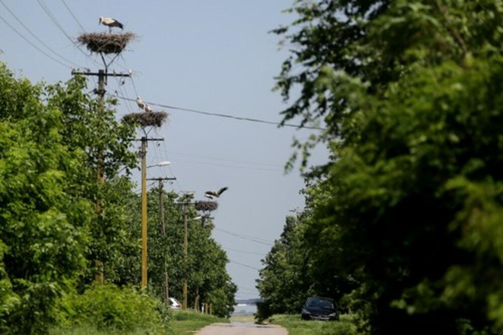 SRPSKO SELO U KOJEM SE RAĐAJU RODE: Čitave kolonije ptica ovde su savile preko 40 gnezda! (FOTO)