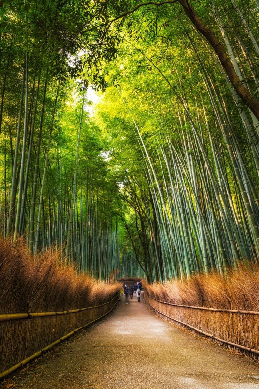 Bambusova šuma u Japanu